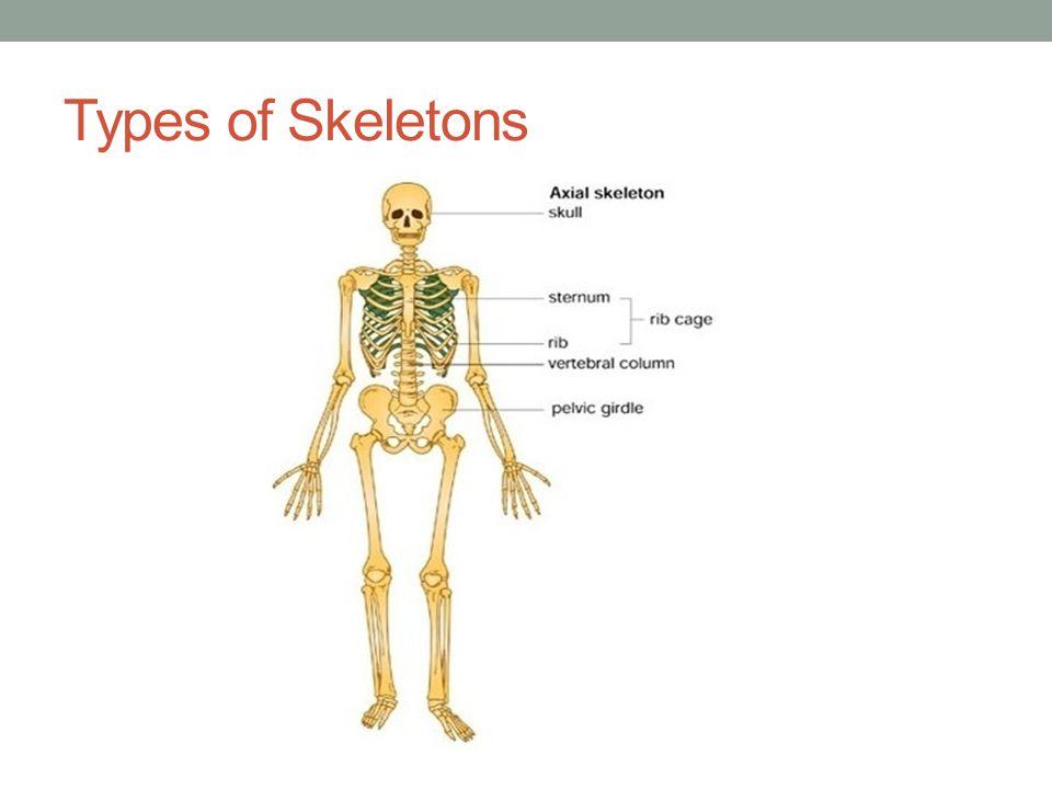 Skeletal Person Sitting Ecosia