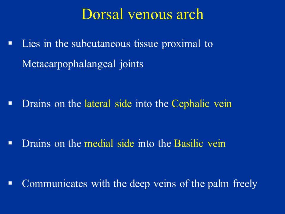 wrist joint (radio-carpal joint) and hand dr. sama ul haque. - ppt, Cephalic Vein