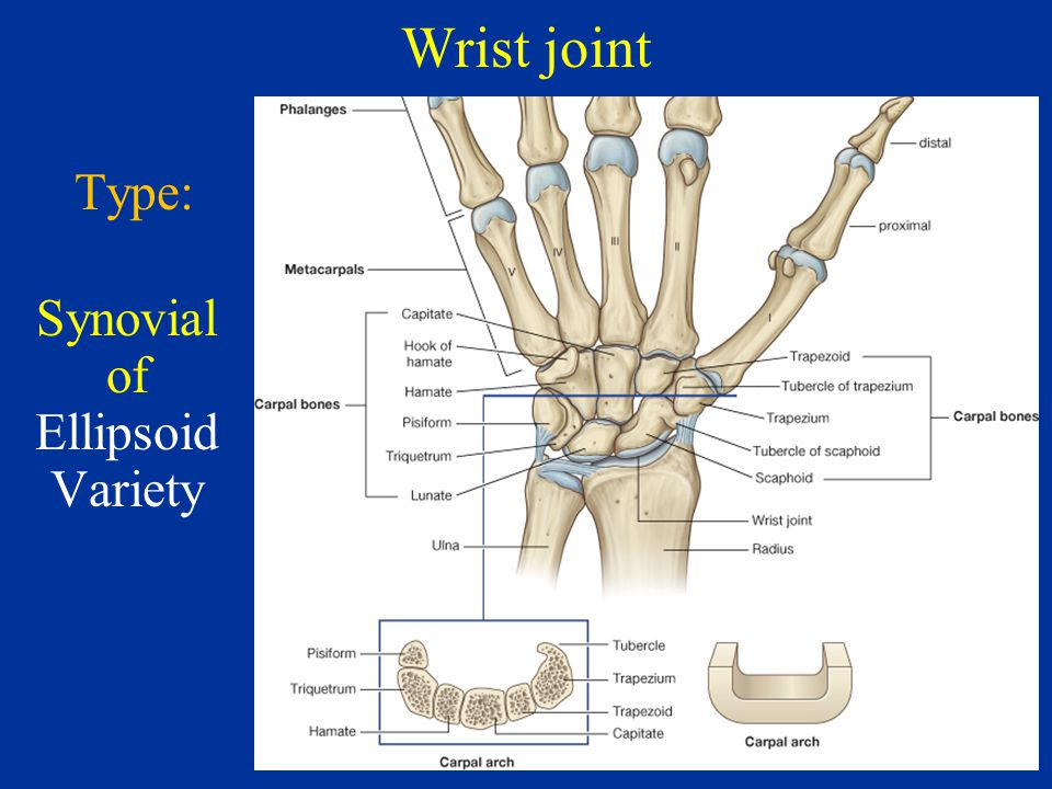 Thumb joint anatomy 2629831 - follow4more.info