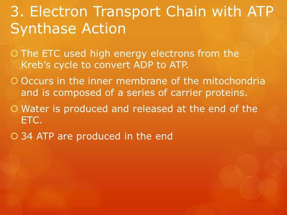 3. Electron Transport Chain with ATP Synthase Action