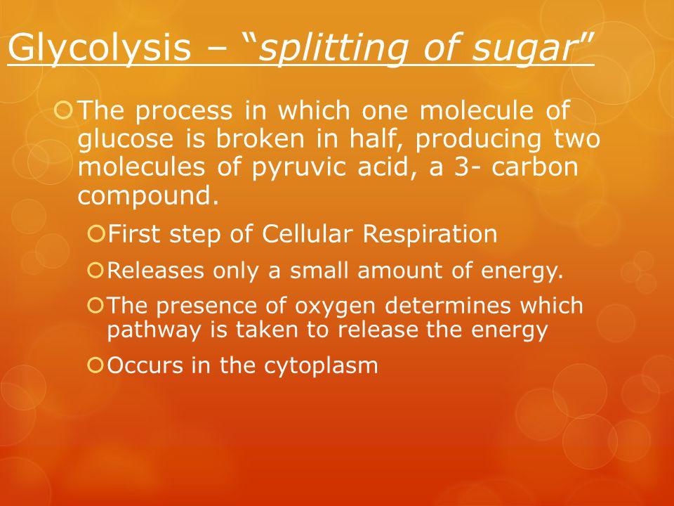 Glycolysis – splitting of sugar