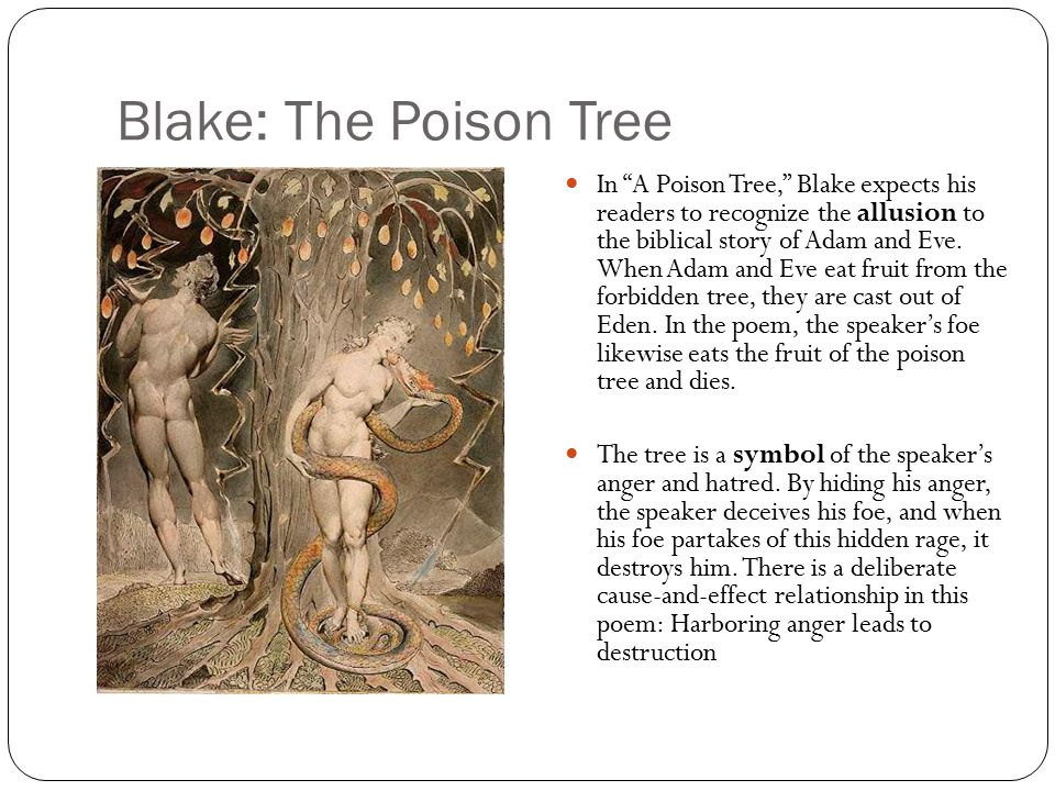 poem analysis a poison tree A poison tree by william blake is a poem that describes what can happen when anger is allowed to grow and fester within a person  analysis of a poison tree.