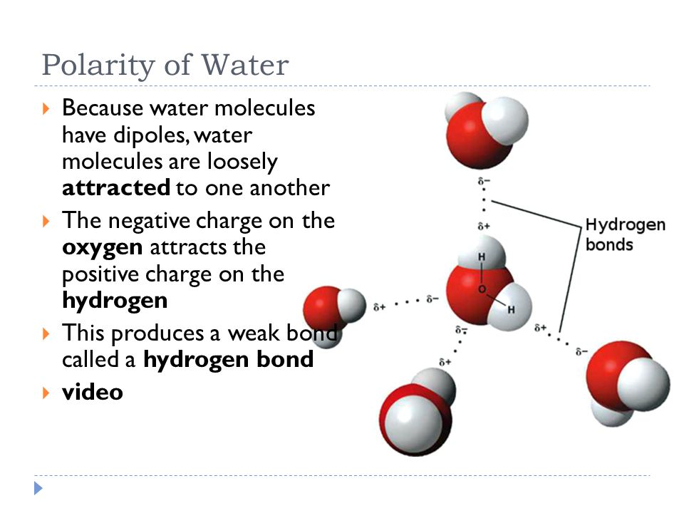 the polarity of water One of water's important properties is that it is composed of polar molecules the two hydrogen atoms and one oxygen atom within water molecules (h 2 o) form polar covalent bonds while there is no net charge to a water molecule, the polarity of water creates a slightly positive charge on hydrogen and a slightly negative charge on oxygen, contributing to water's properties of attraction.