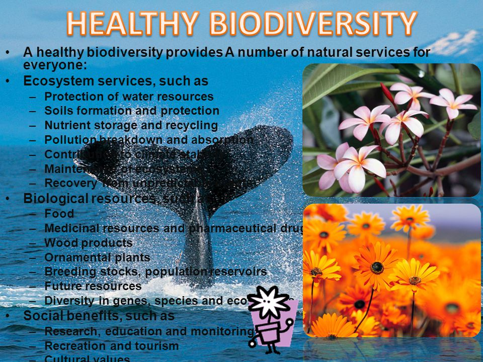 conservation biodiversity and natural resources Biodiversity conservation high impact list of articles ppts journals 7036  plos biology, society & natural resources, forest ecology and management,.