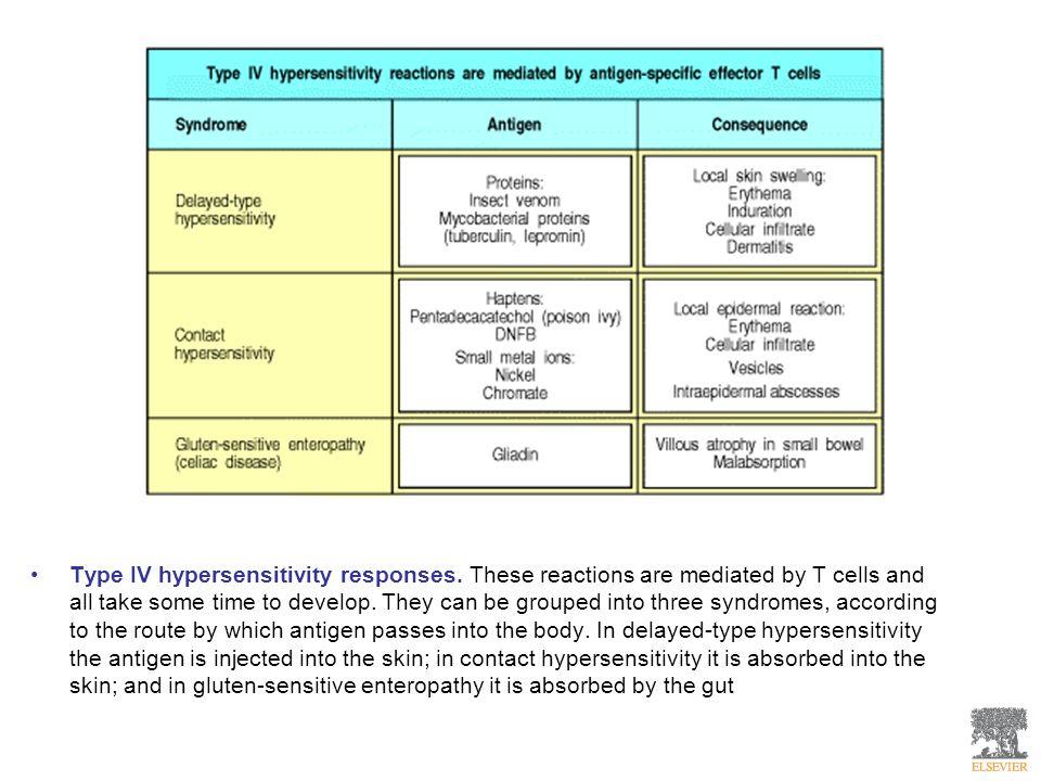 Type IV hypersensitivity responses