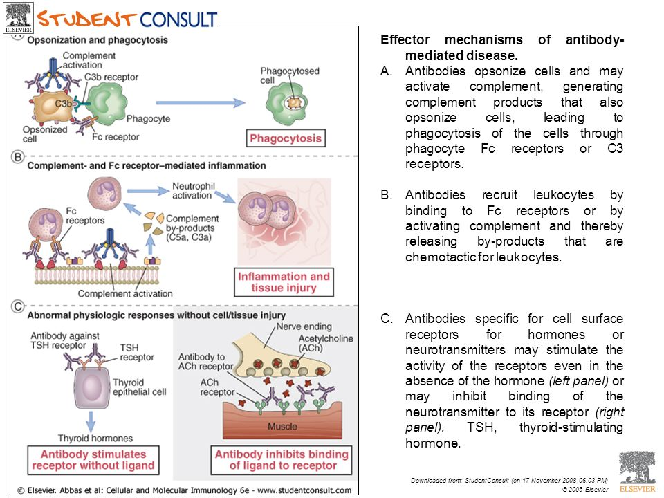 Effector mechanisms of antibody-mediated disease.