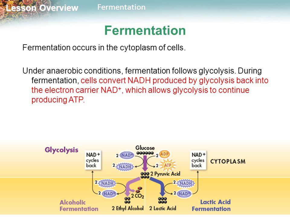 Lactic Acid Fermentation Definition S Equation Lesson Transcript Study
