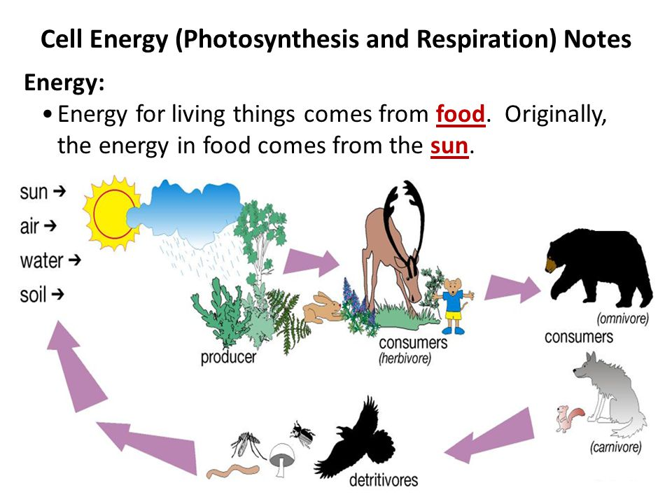 relationship between photosynthesis and respiration in plant cells