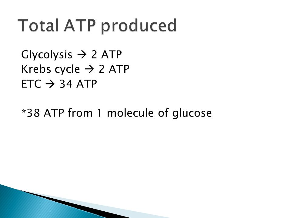Total ATP produced Glycolysis  2 ATP Krebs cycle  2 ATP ETC  34 ATP *38 ATP from 1 molecule of glucose