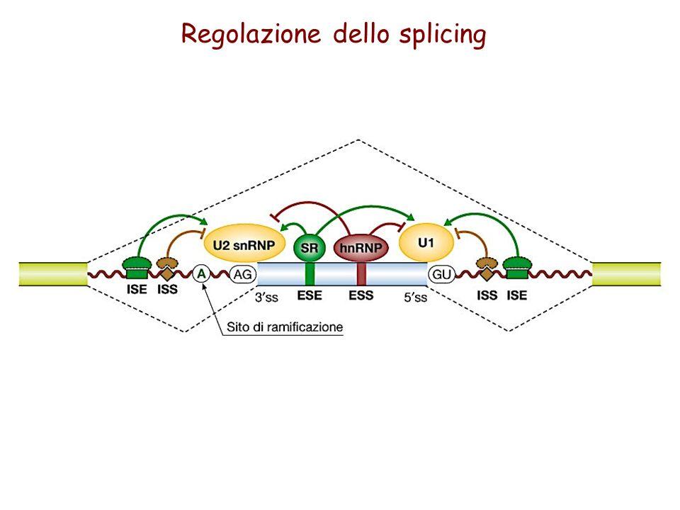 Regolazione dello splicing