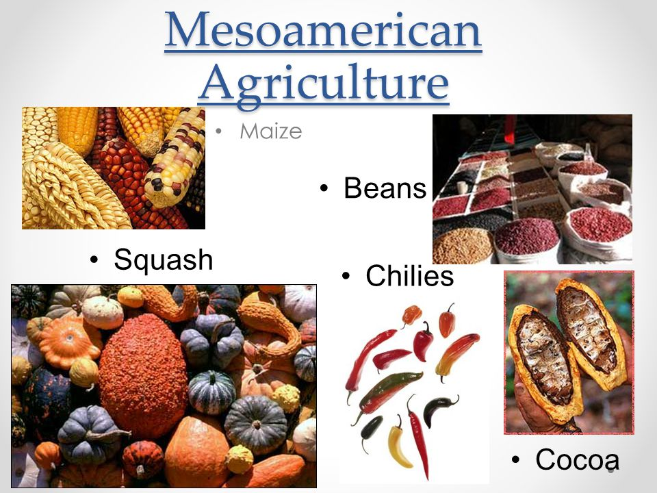Mesoamerican Agriculture