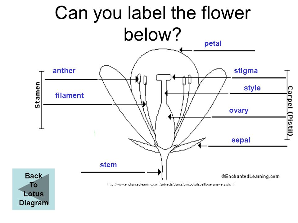 Can you label the flower below
