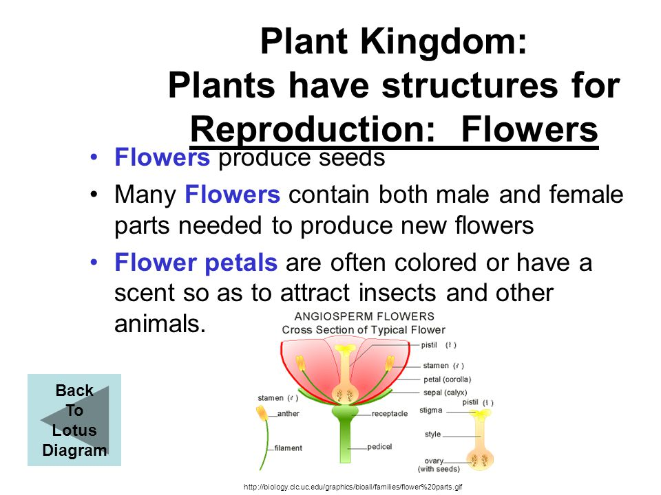 Plant Kingdom: Plants have structures for Reproduction: Flowers
