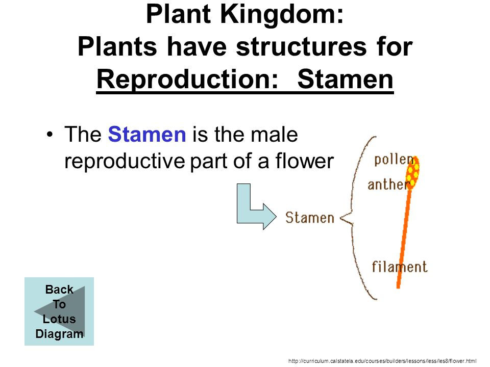 Plant Kingdom: Plants have structures for Reproduction: Stamen