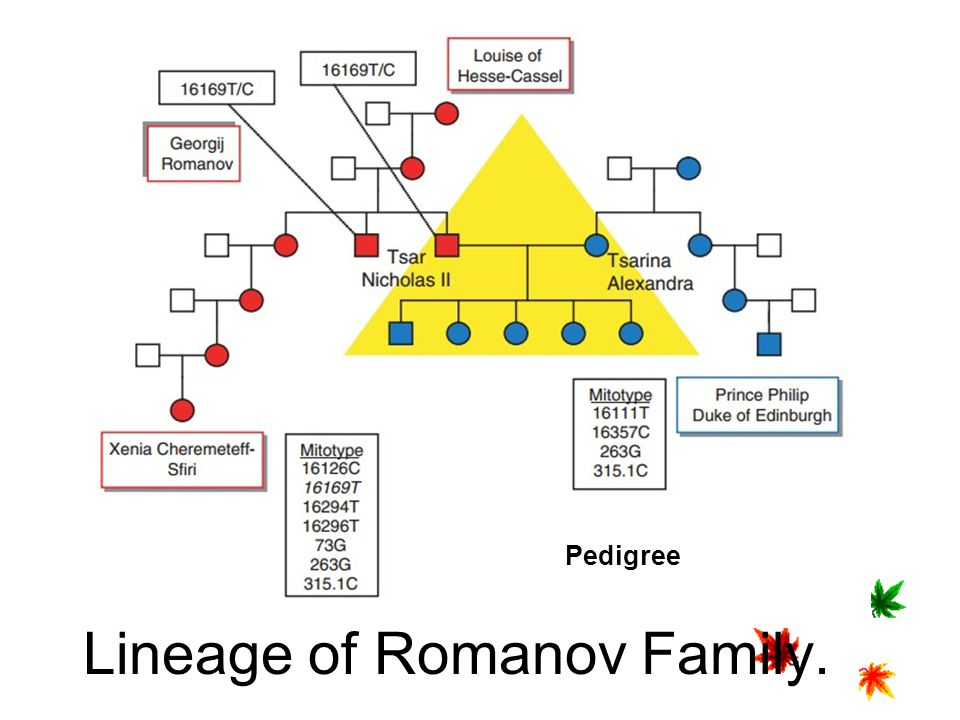 Lineage of Romanov Family.