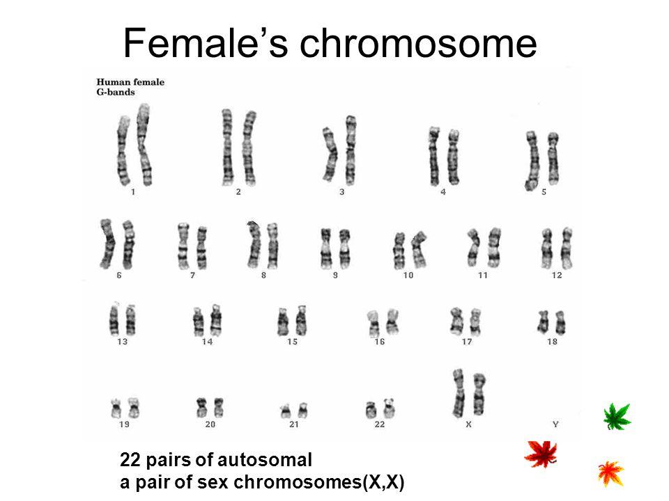 Female's chromosome 22 pairs of autosomal