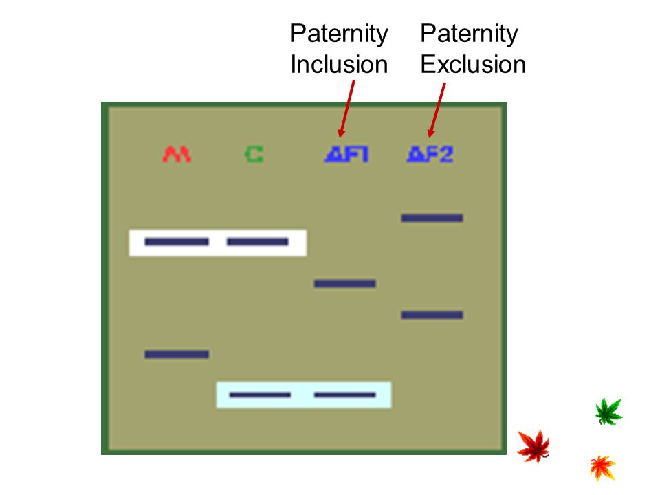 Paternity Inclusion Paternity Exclusion