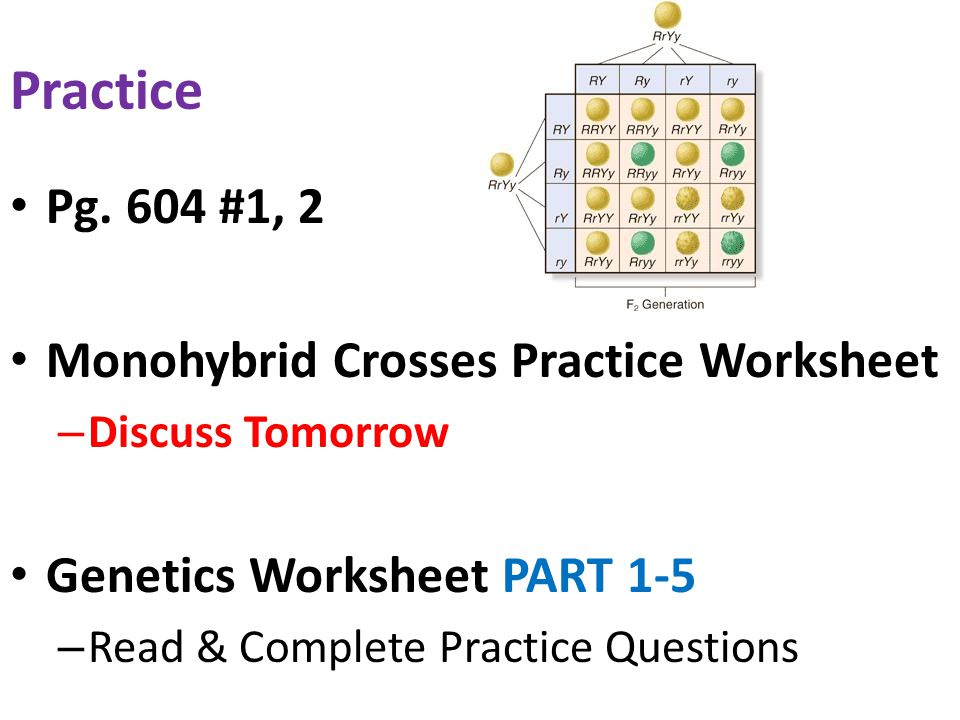 Genetics worksheet part 10