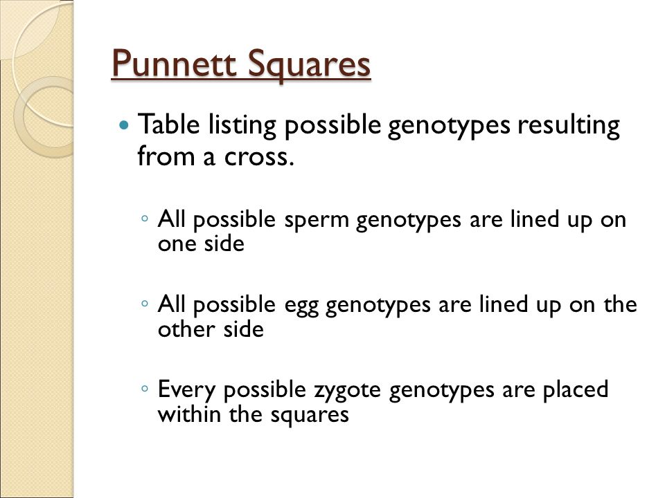 Punnett Squares Table listing possible genotypes resulting from a cross. All possible sperm genotypes are lined up on one side.