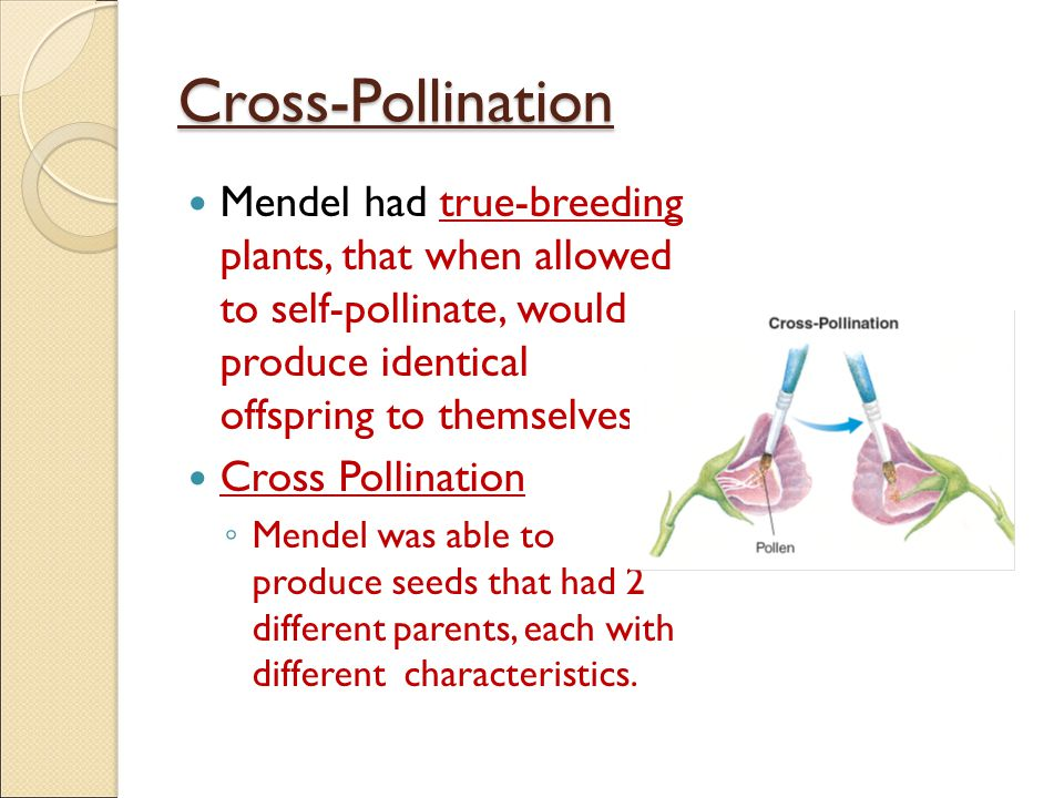 Cross-Pollination Mendel had true-breeding plants, that when allowed to self-pollinate, would produce identical offspring to themselves.