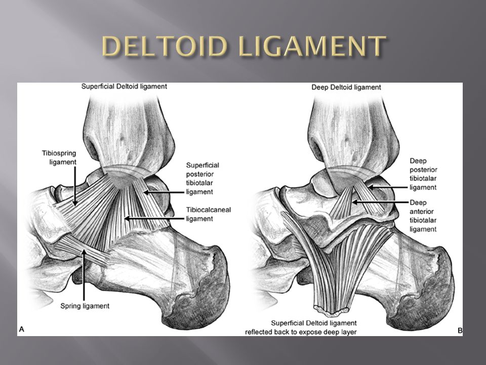 Images of Deltoid Ligament Ankle Mri - #SpaceHero