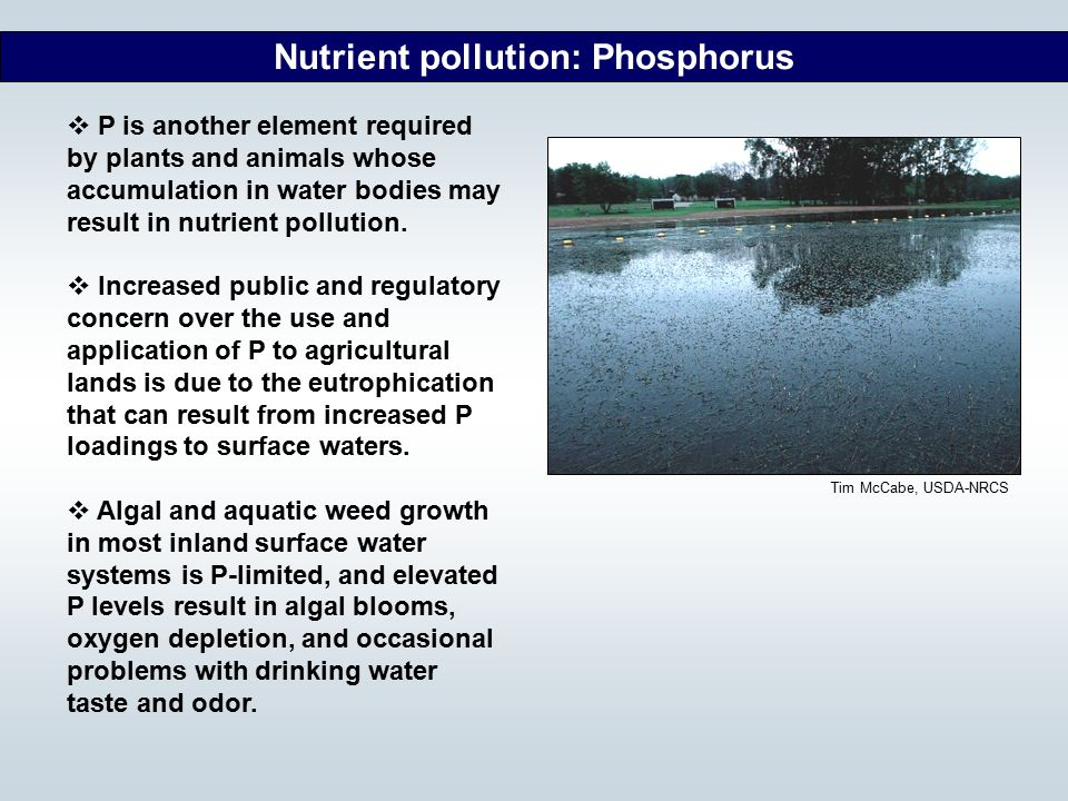 Nutrient pollution: Phosphorus