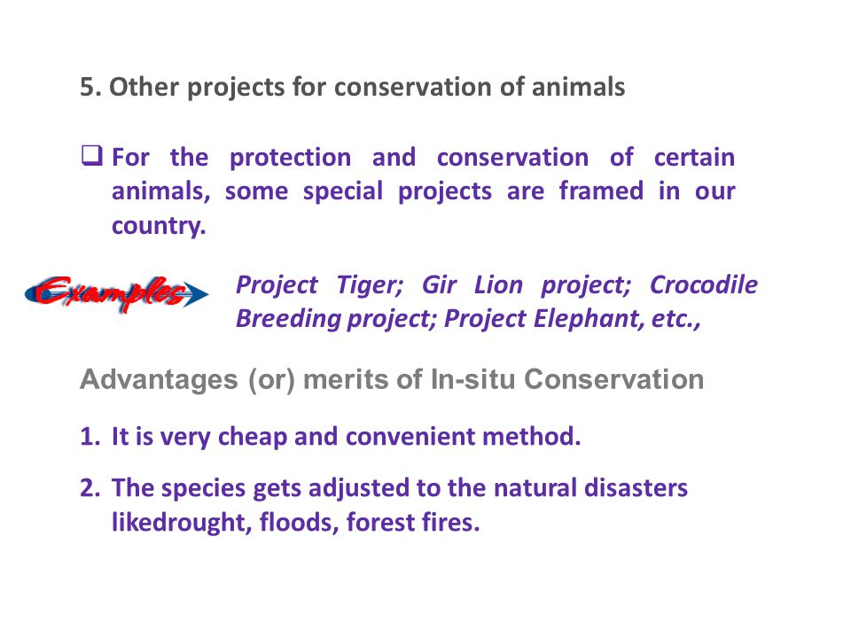 5. Other projects for conservation of animals