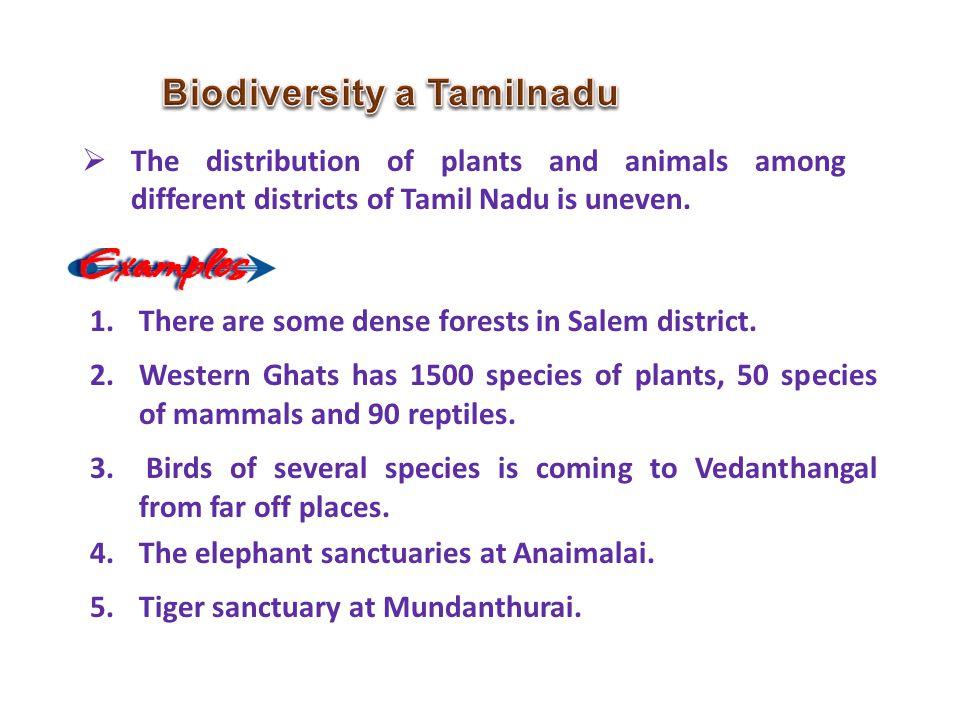 Biodiversity a Tamilnadu
