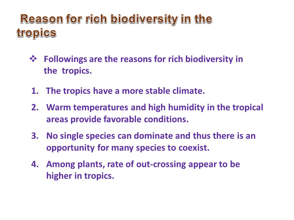 Reason for rich biodiversity in the tropics