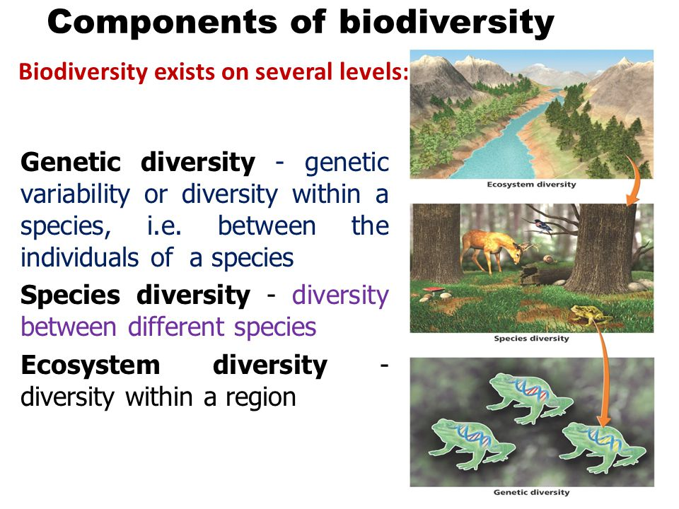 components of biodiversity Biodiversity as far as scientists can tell, the earth is unlike any other place in the entire universe for among the countless stars figure 4 the main structural components of an ecosystem are linked by matter recycling and the flow of energy from the sun.