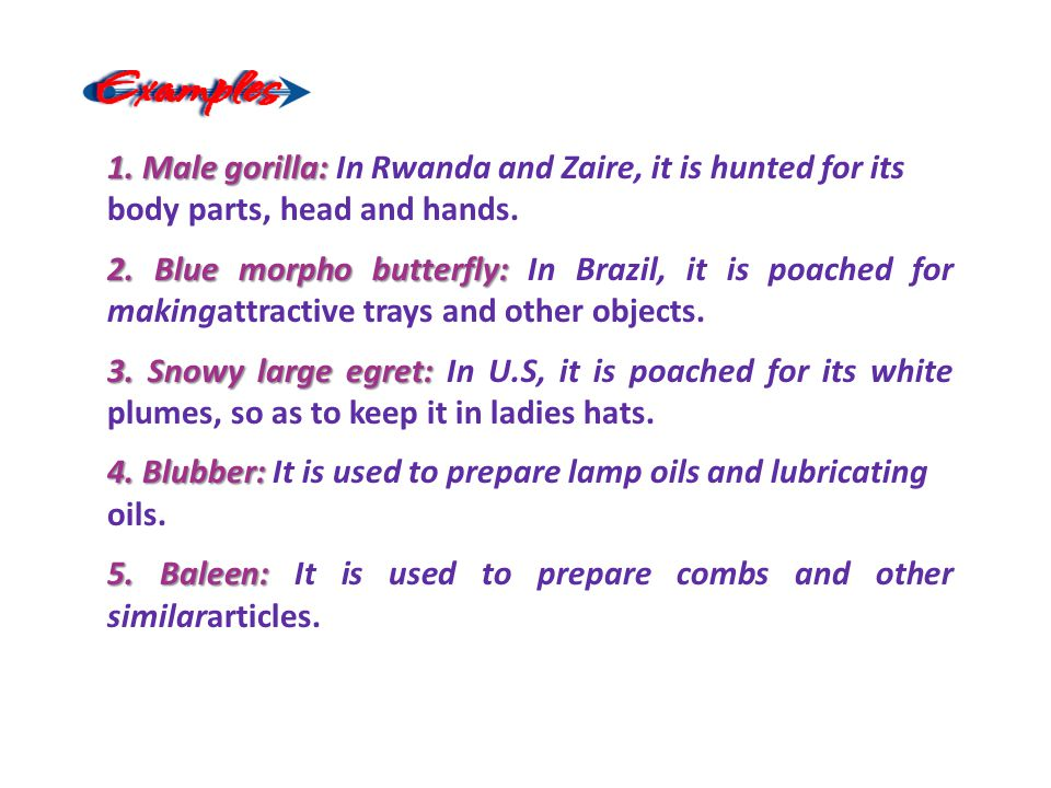 1. Male gorilla: In Rwanda and Zaire, it is hunted for its