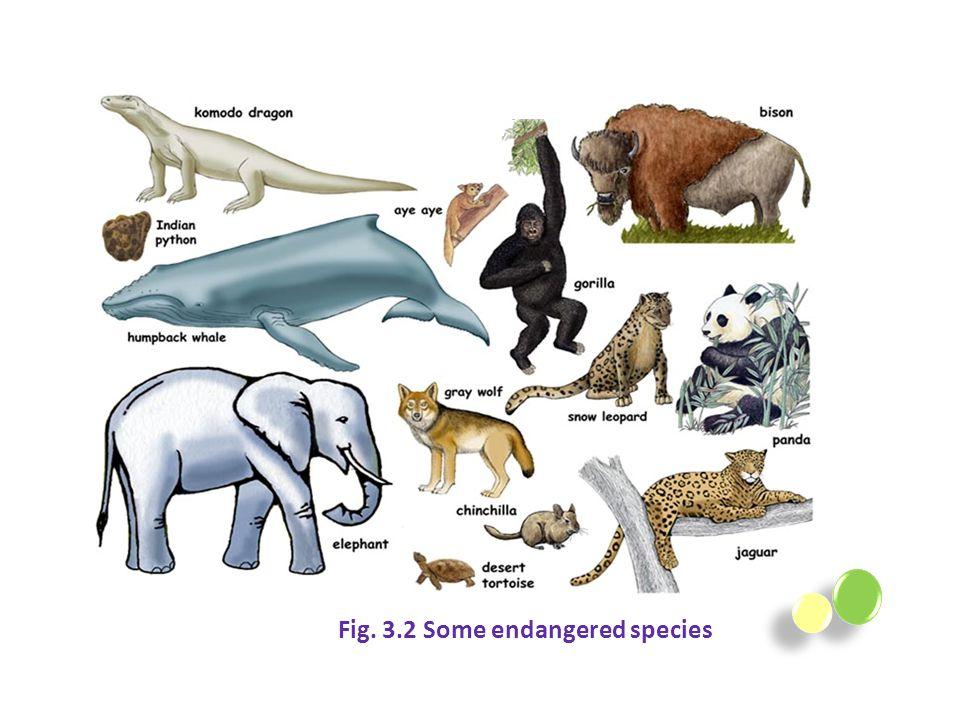 Fig. 3.2 Some endangered species
