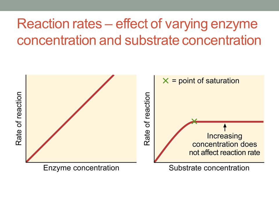Concentration and Chemical Reaction Rate
