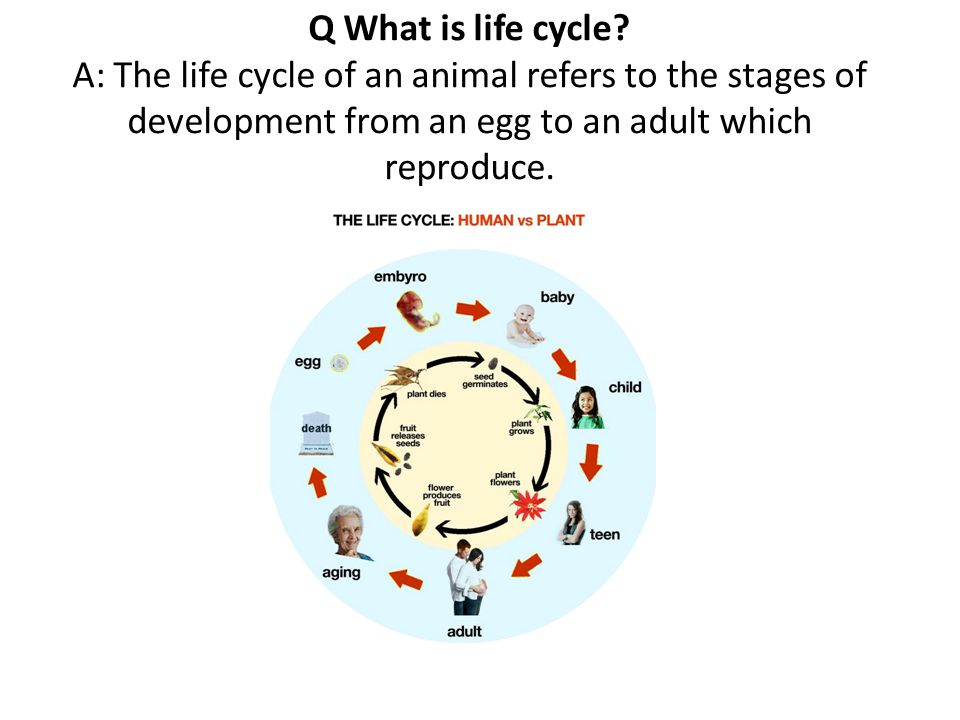 Q What is life cycle.