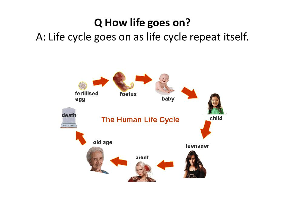 Q How life goes on A: Life cycle goes on as life cycle repeat itself.