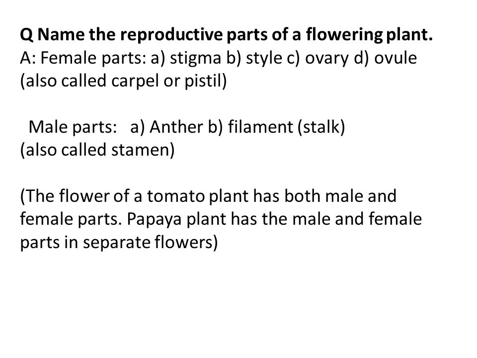Q Name the reproductive parts of a flowering plant