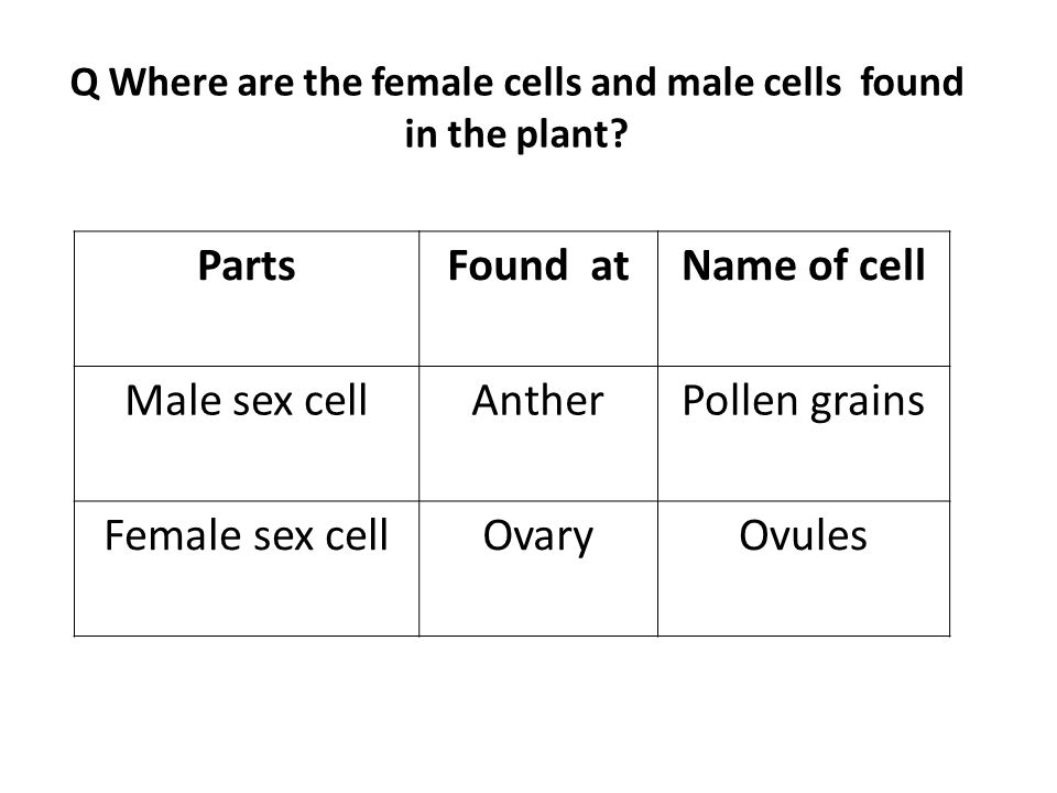 Q Where are the female cells and male cells found in the plant