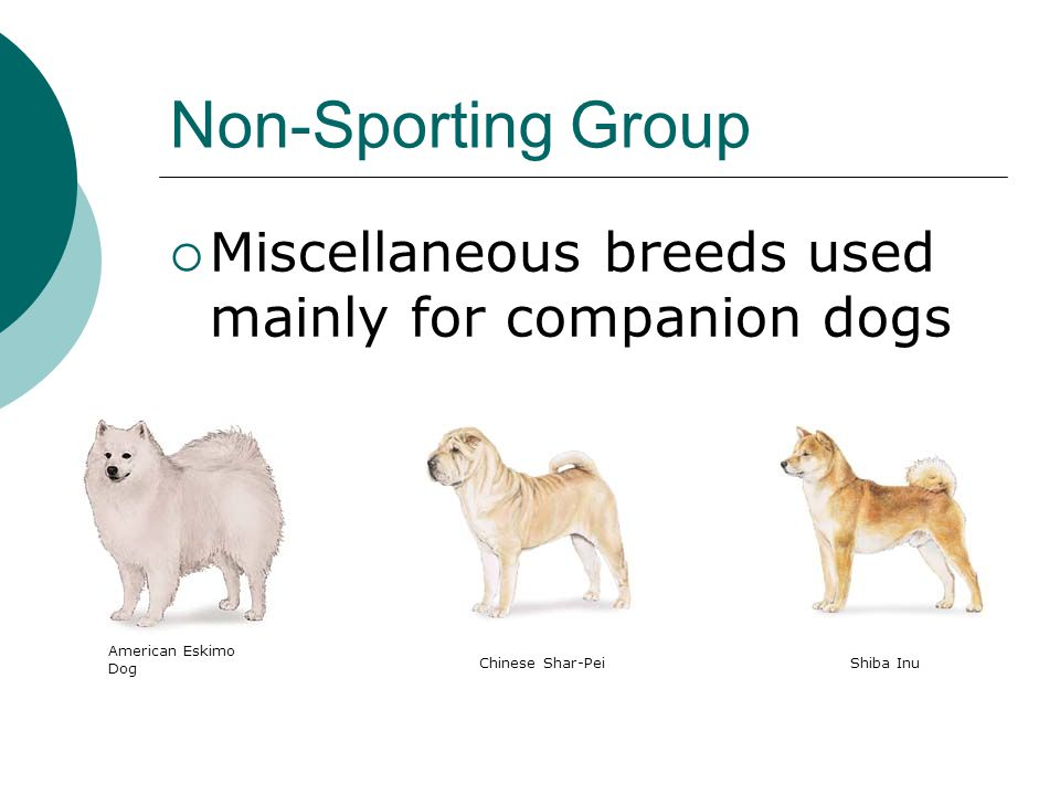 Canine knotting