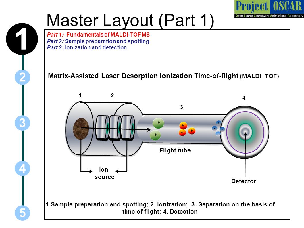 Matrix-Assisted Laser Desorption Ionization Time of Flight (MALDI ...