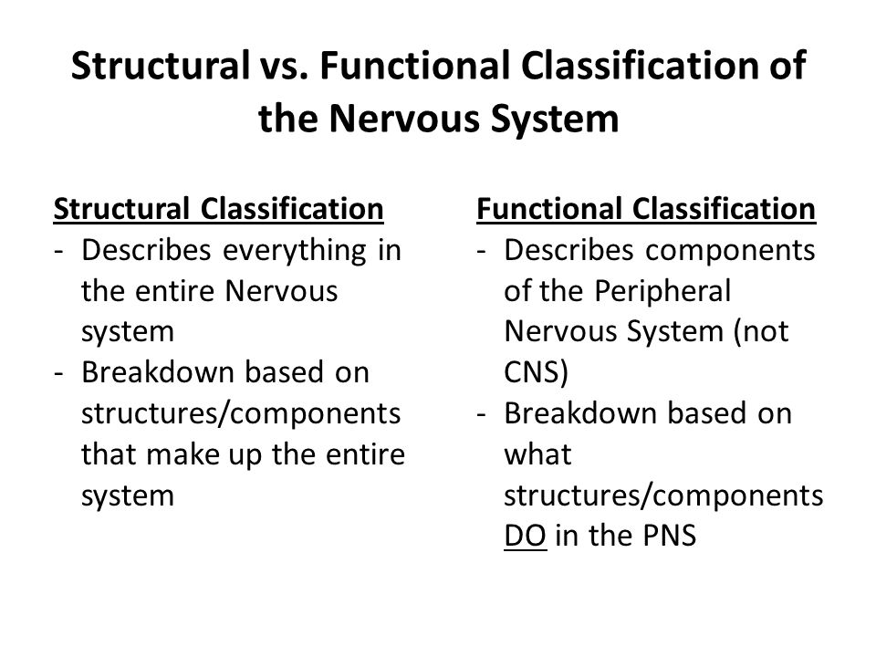 Structural vs. Functional Classification of the Nervous System