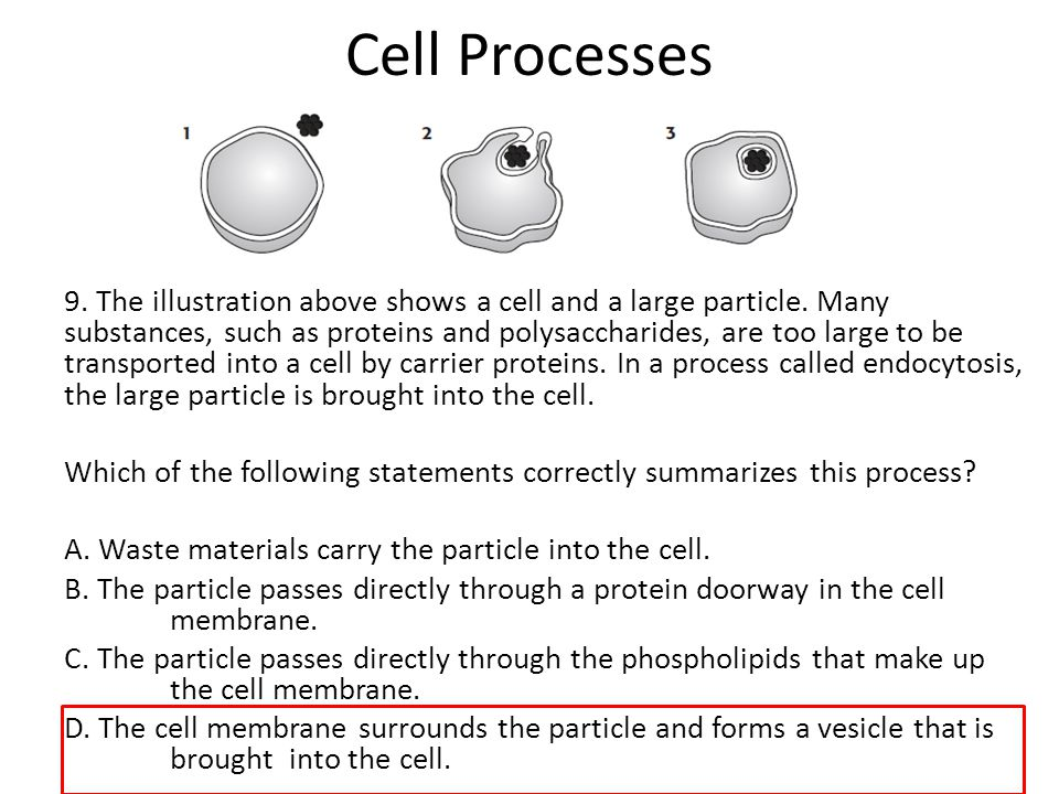 Scientific Process A They did not have a control ppt download – Cell Processes Worksheet