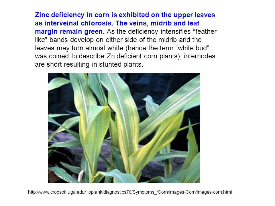Soil c o h n k ca mg p s cl fe mn zn b cu mo air water for Soil zinc deficiency