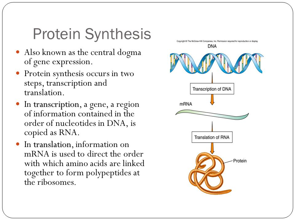an analysis of the expression of a gene in protein synthesis Gene expression is the process by which the genetic code - the nucleotide  sequence - of a gene is used to direct protein synthesis and produce the  structures of.