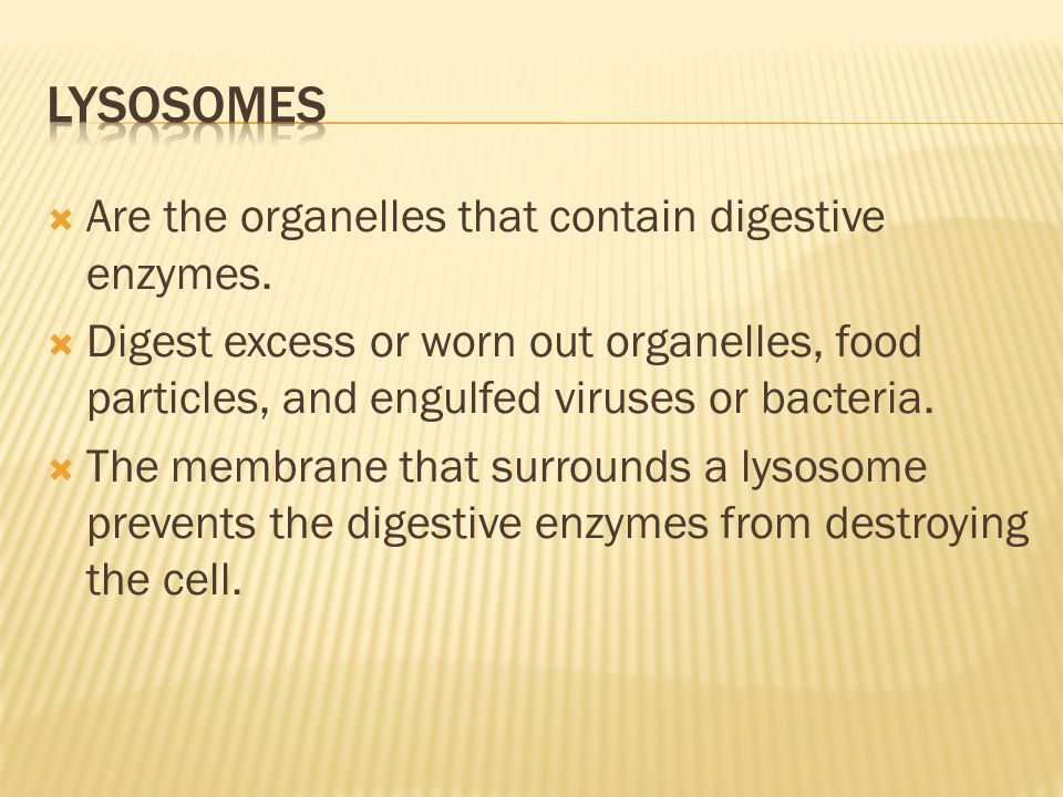 Lysosomes Are the organelles that contain digestive enzymes.