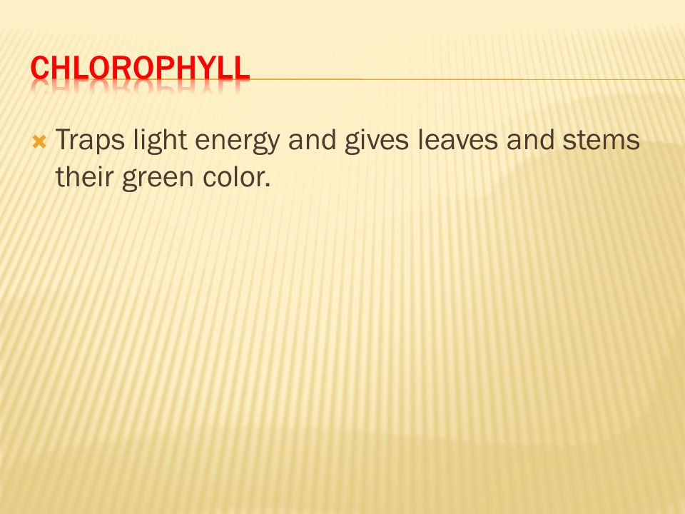 chlorophyll Traps light energy and gives leaves and stems their green color.