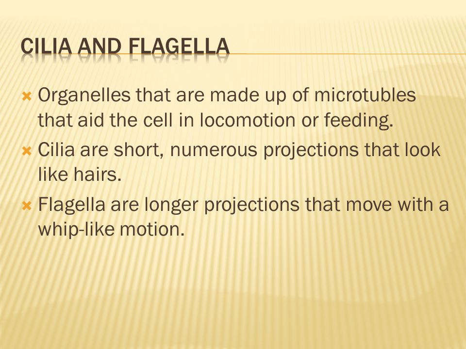 Cilia and flagella Organelles that are made up of microtubles that aid the cell in locomotion or feeding.
