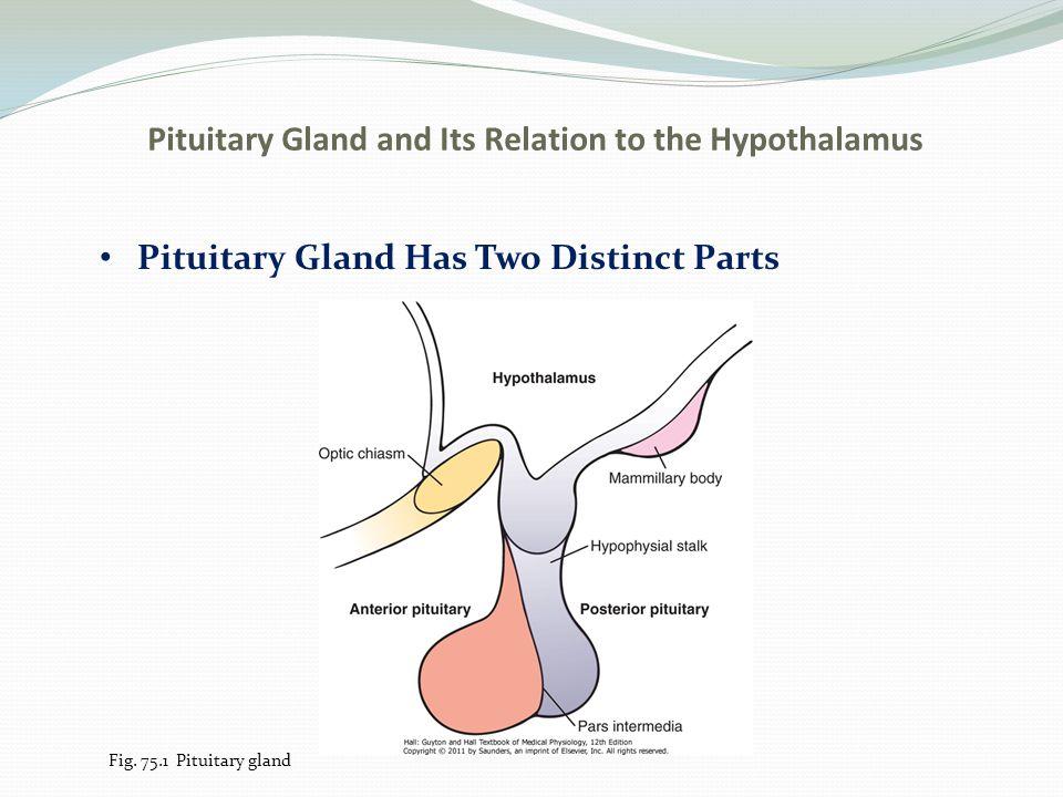 Encantador Anatomy And Physiology Of Pituitary Gland Ppt Motivo ...