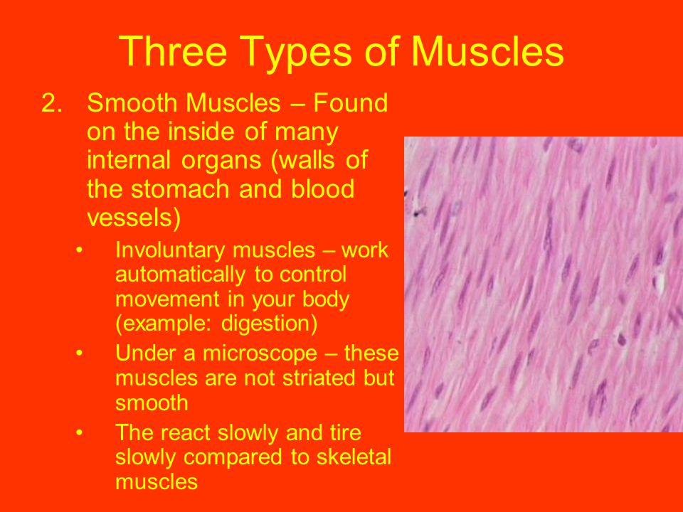 The involuntary muscle that moves food through ... - Socratic