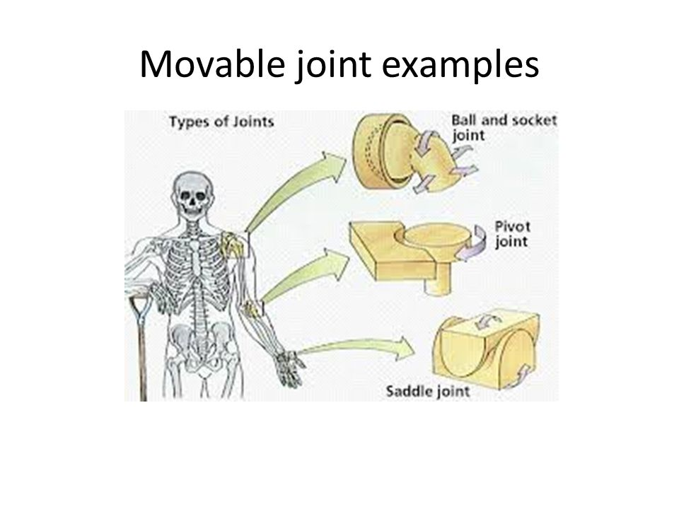 Movable joint examples