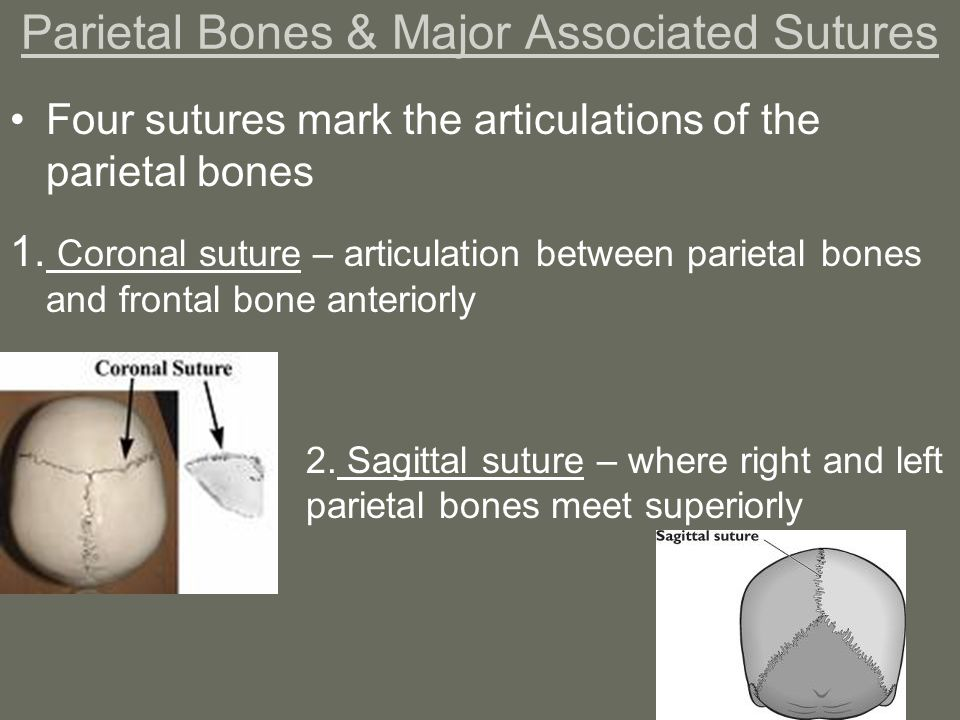 coronal and sagittal sutures meet the fockers